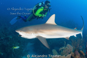 Shark eating with Diver, Gardens of the Queen Cuba by Alejandro Topete 